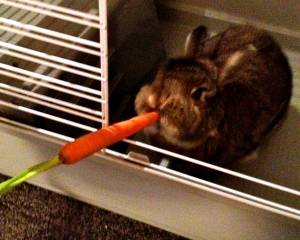 No Jessica! I need the carrot for the chicken stock!